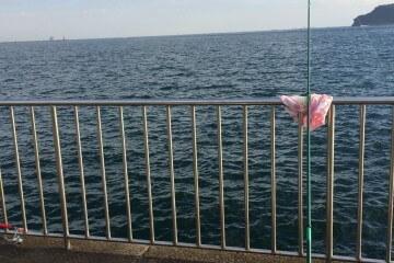 9月の鯖祭り